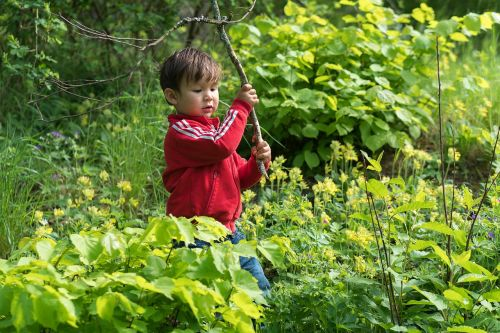 boy forest nature