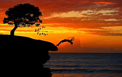 boy cliff jump