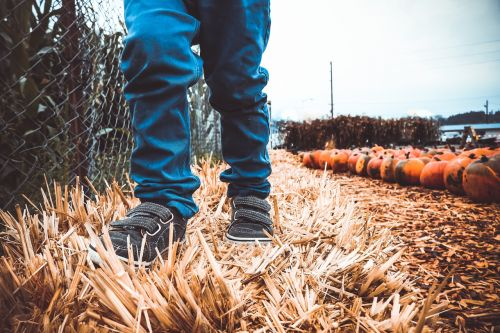 boy,child,hay,pumpking,autumn,fall,october,thanksgiving,childhood,little boy,pants,jeans,shoes