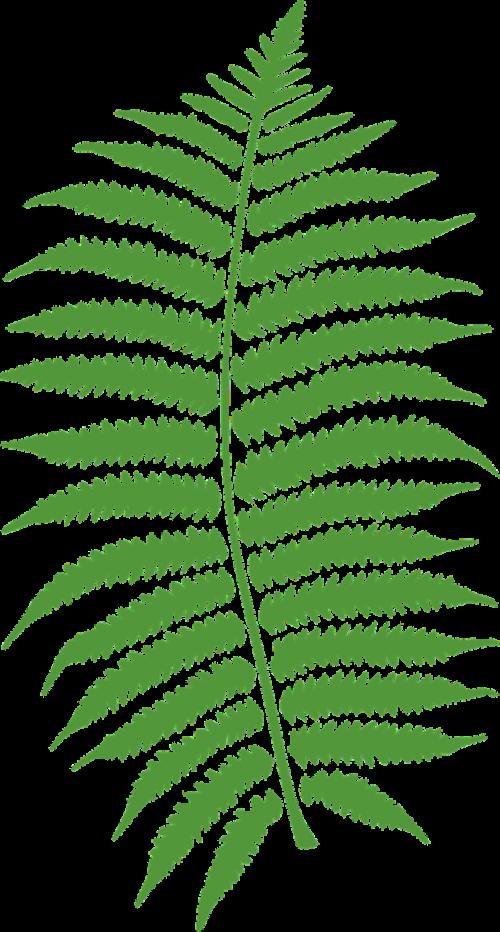 bracken fern plant
