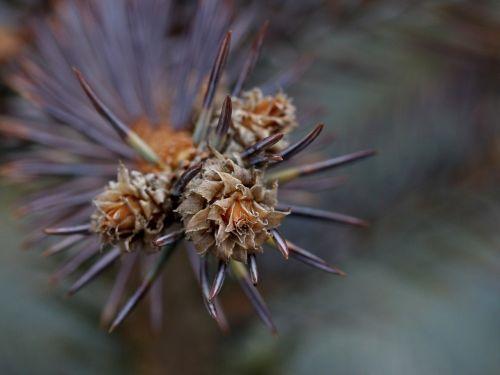 brad flower inflorescence