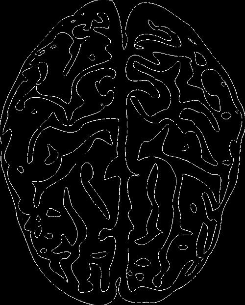 brain anatomy human