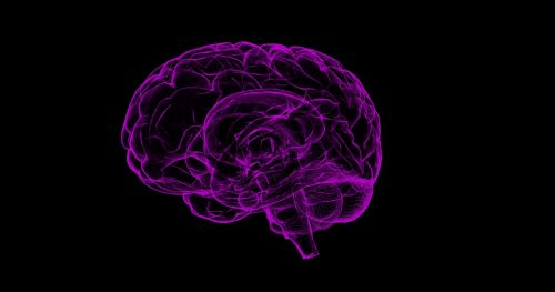 brain human anatomy anatomy