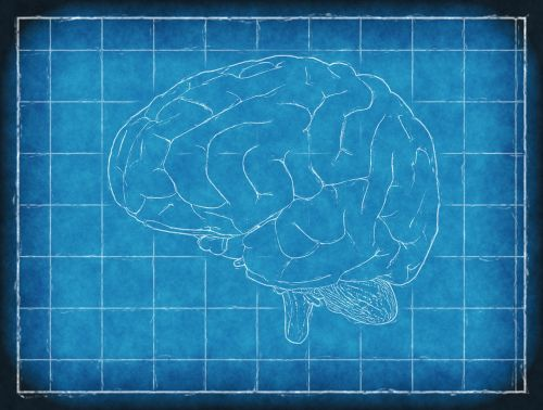 brain blueprint thinking