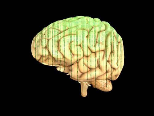brain matrix intelligence