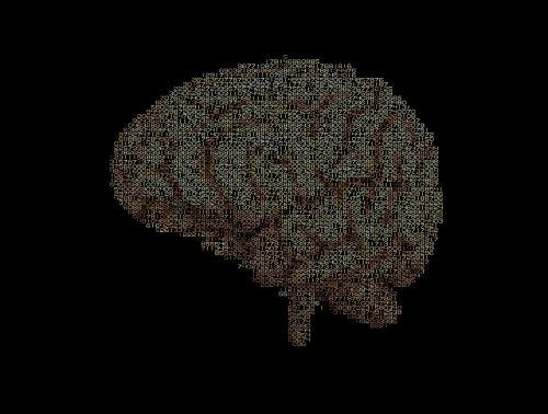 brain calculation intelligence