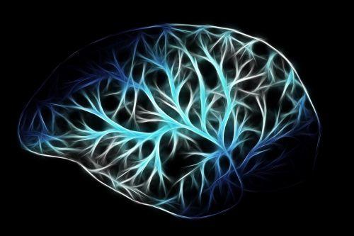 brain biology anatomy