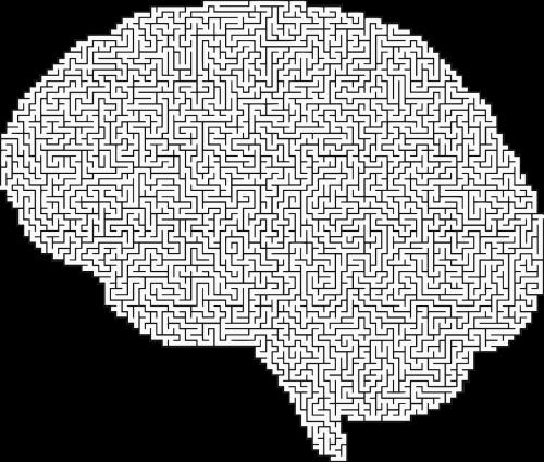 brain cranium head