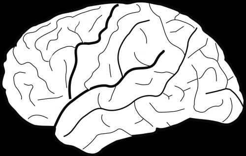 brain biology psychology