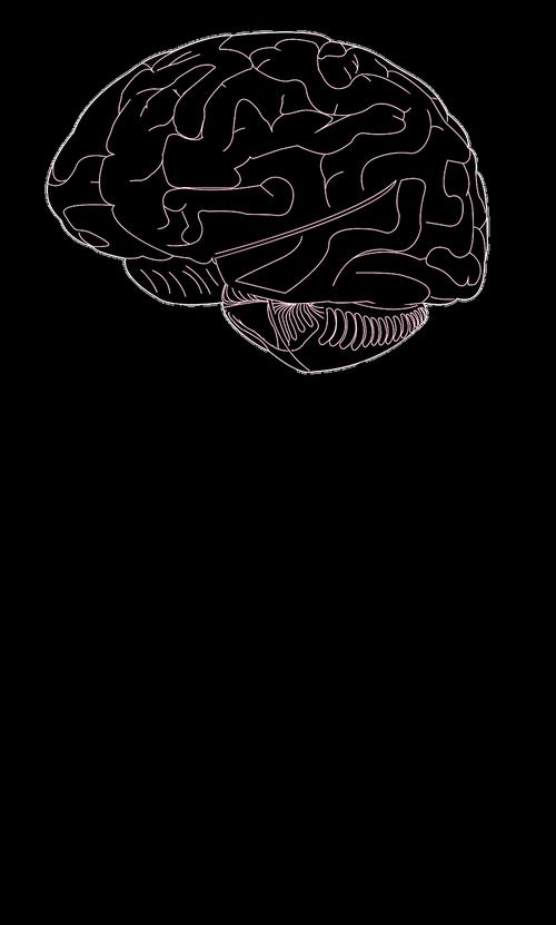 brain  think  psychology