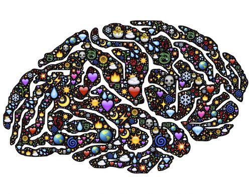 brain conscious consciousness