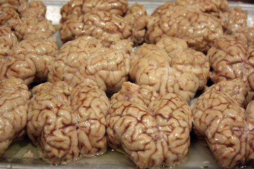 brains disgusting organ