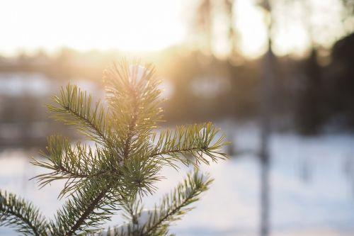 branch sunlight sunny