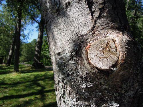 branch tree finnish