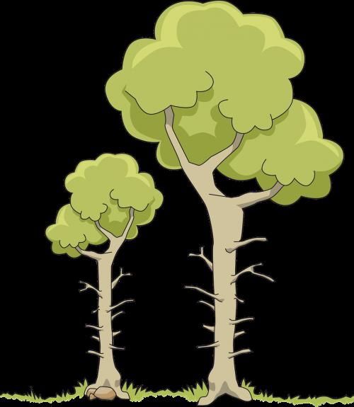 branch cut nature