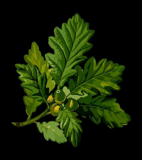 branch cornish deciduous