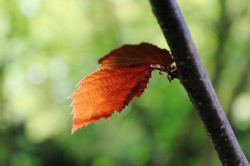 branch leaf nature