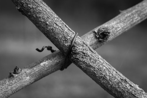 branch branches wire