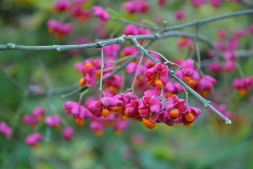 branch branches twig