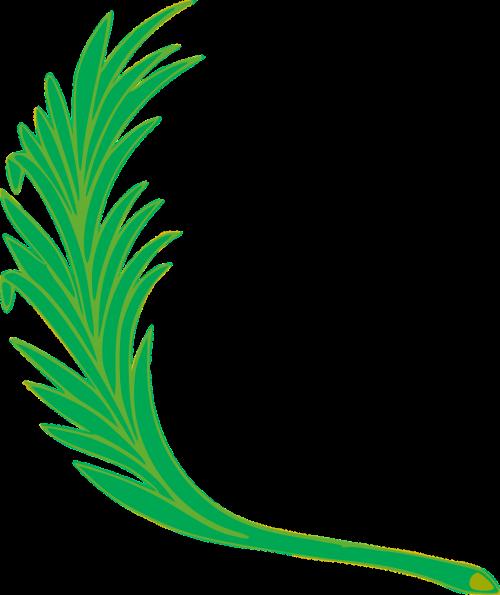 branch leaf leafy