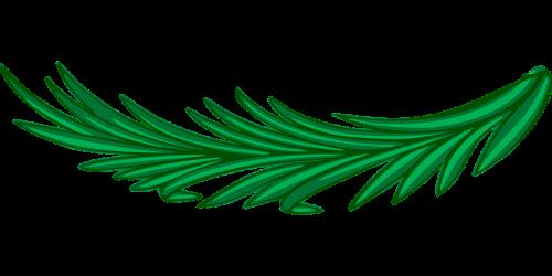 branch laurel leaf