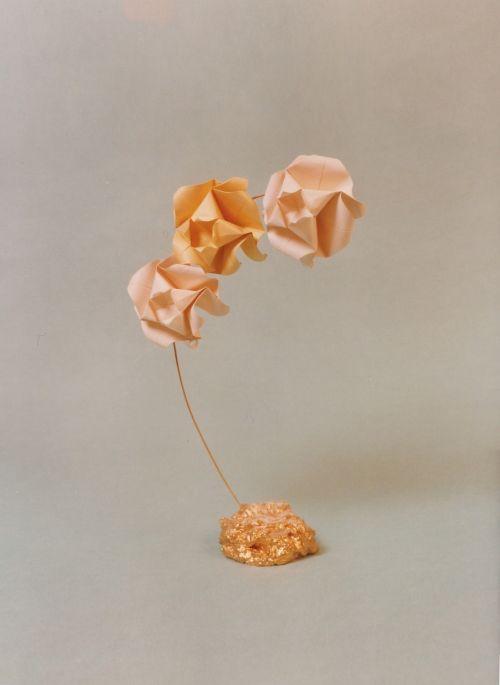 branch rose flowers
