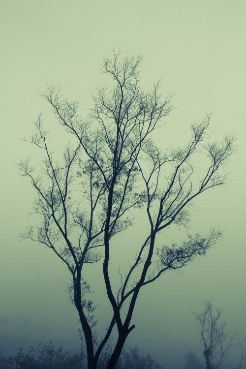 branch fog mist