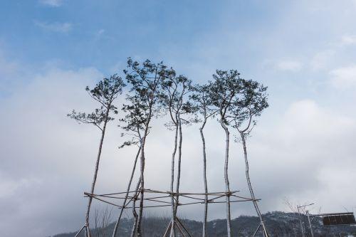 branch calm cloud