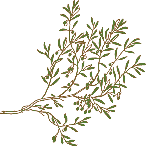 branch olive green