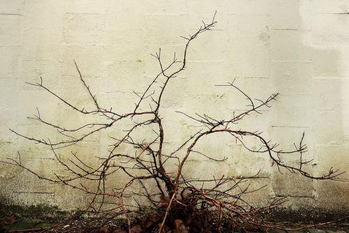 branch bough bare