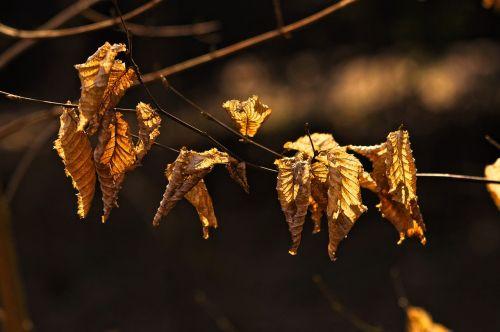branch leaf foliage