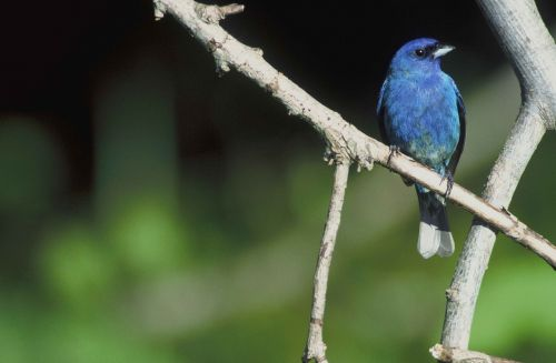 branch perches bird