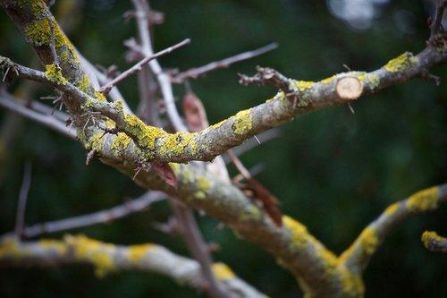 branch  dry branch  moss