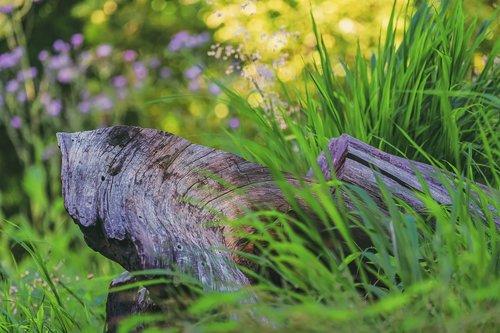 branch  old  morsch