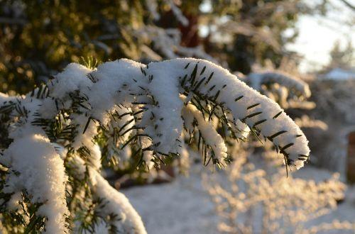 branch winter snow
