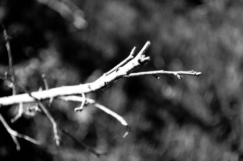 branch dry dry tree