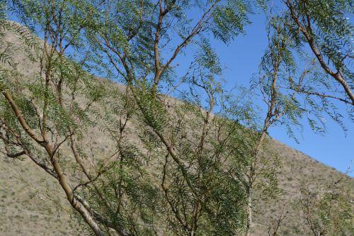 Branch Leaf Tree Nature Park Trail