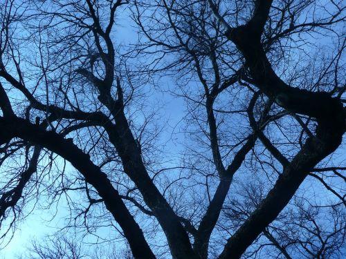 branches winter branch