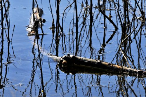 Branches In Marsh