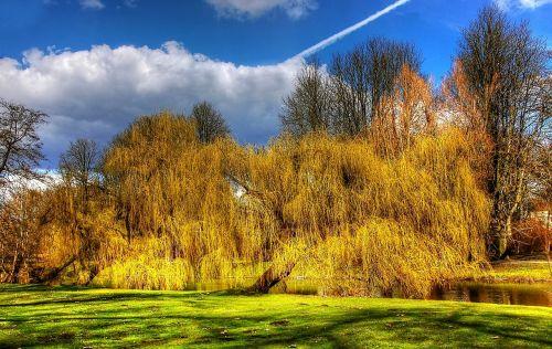 braunschweig park forest