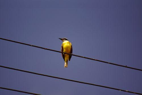 bird wire wildlife