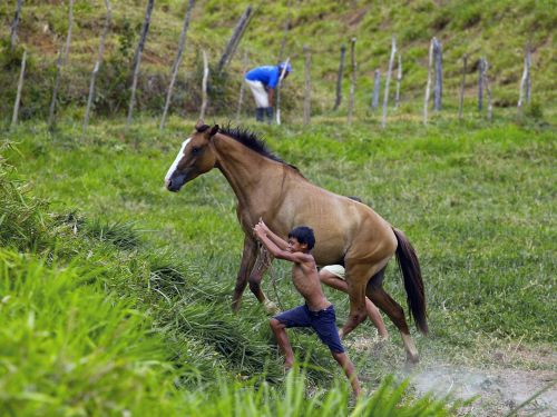 brazil countryside horse