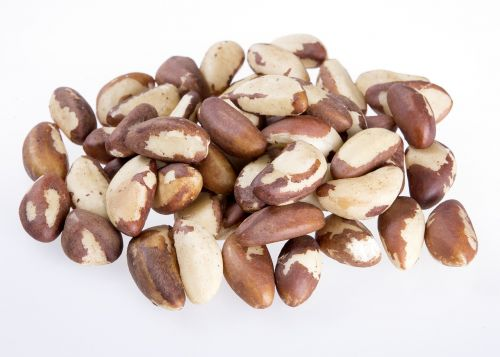 brazil nut seeds natural nuts eat