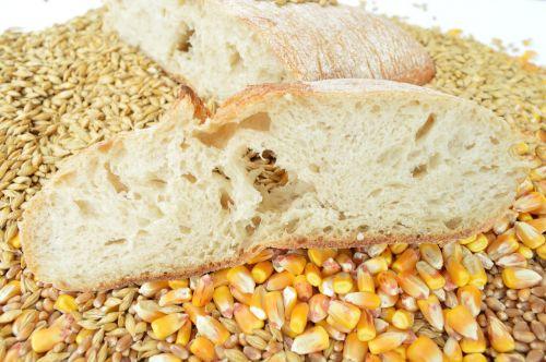 bread cereals wheat