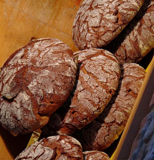 bread daily bread baker
