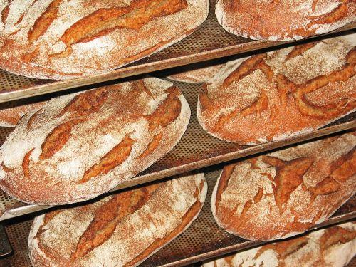 bread fresh bread frisch