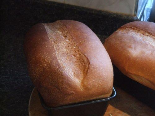 bread loaves baking