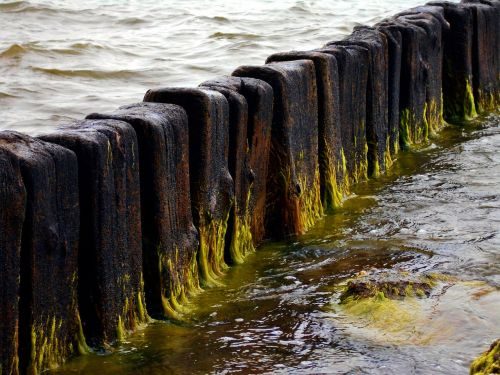 breakwater sea seaweed