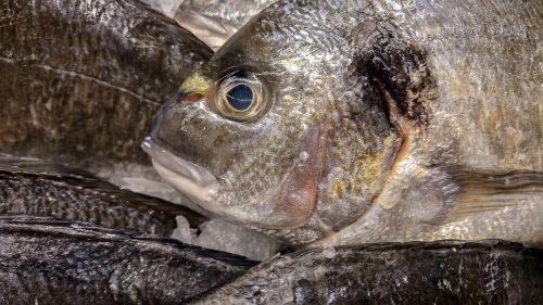 bream fish fishing