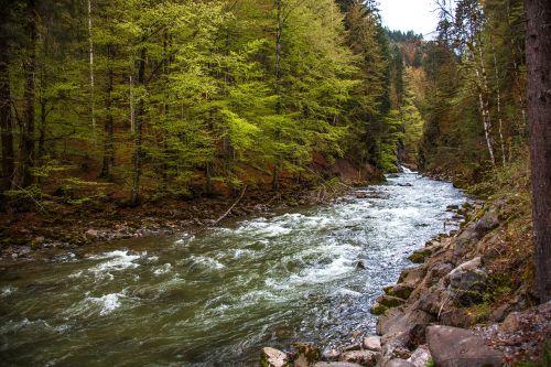 Breitachklamm,bavarija,Gorge,kalnų upelis,vanduo,murmur,Bachas,Allgäu,gamta,srautas,šaltas,begantis vanduo,kraštovaizdis,baltas vanduo,Breitach,vandenys